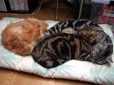 3色猫だんご