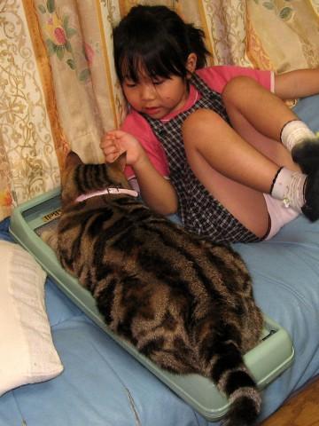 猫の爪とぎダンボール