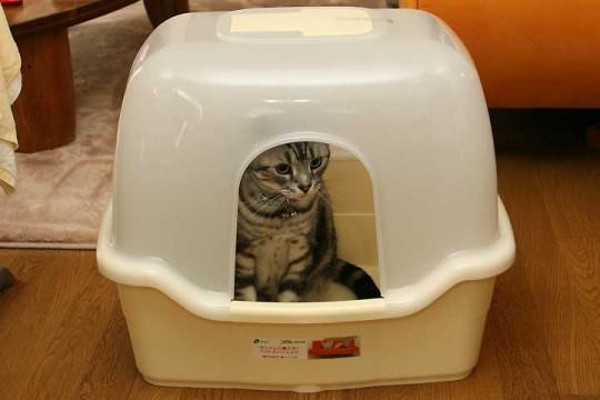 コロル ネコトイレ F60 フード付