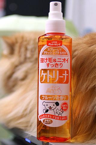 【3年前】ペルシャ猫にケトリーナ