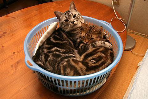 2009年5月16日 「我が家自慢のねこ大集合2 猫ブログコレクション」用のニャンズ写真