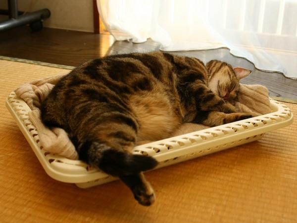 2009年6月3日 隠れていたのはかご猫