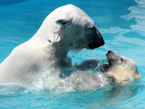 2006年7月13日 白熊で涼もう