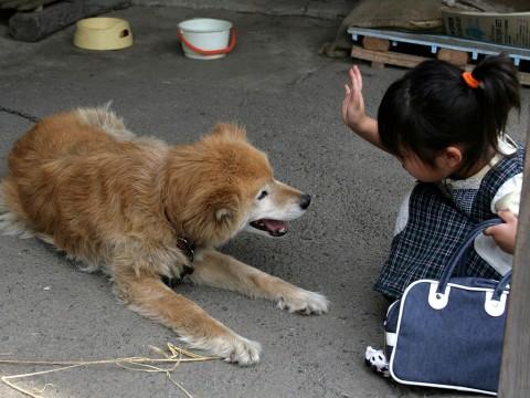 2009年7月4日 田舎のワンコ