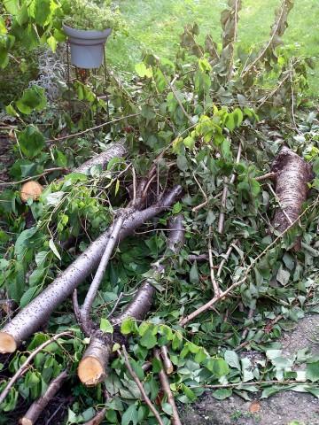 2009年7月14日 切り落とした桜