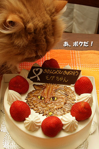 2008年7月24日 さあ、似顔絵ケーキです クリーム、クリーム
