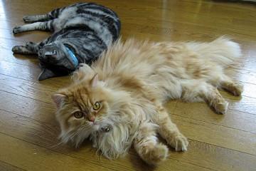 2008年7月19日 ネコもエコ