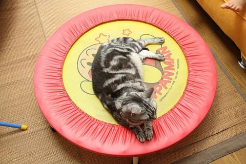 借り物のトランポリンで寝るタム