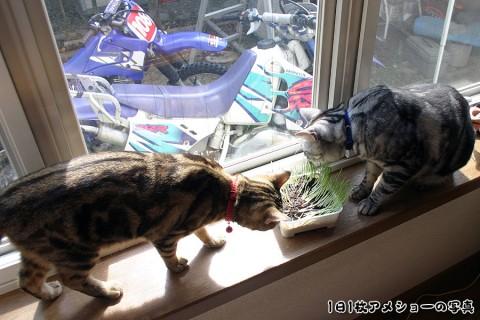 2005年10月7日 お~っと猫草だ