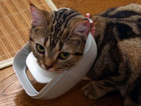 2008年11月25日 「愛しのおバカ猫」候補その6