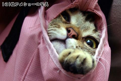 2008年11月22日 「愛しのおバカ猫」候補その3