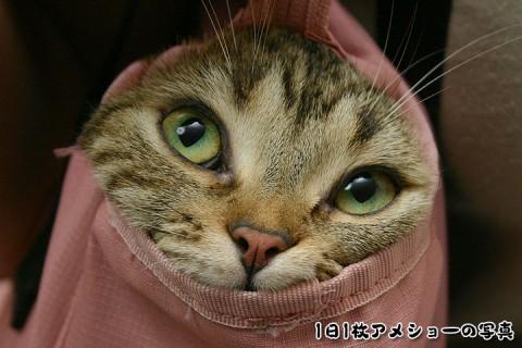 2008年11月23日 「愛しのおバカ猫」候補その4