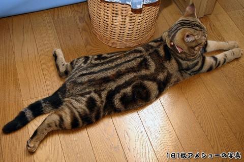 2008年11月24日 「愛しのおバカ猫」候補その5