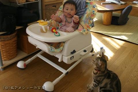 2005年11月22日 ネコじゃらし