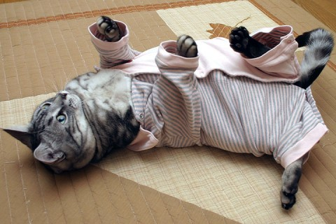 2008年11月27日 「愛しのおバカ猫」候補その8