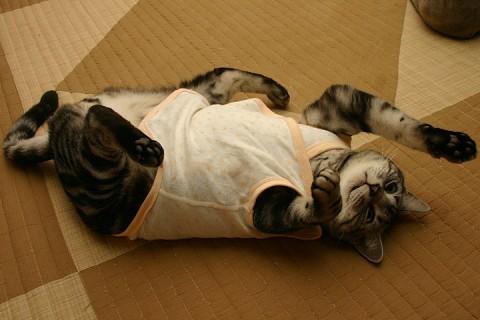 2008年11月27日 「愛しのおバカ猫」候補その9