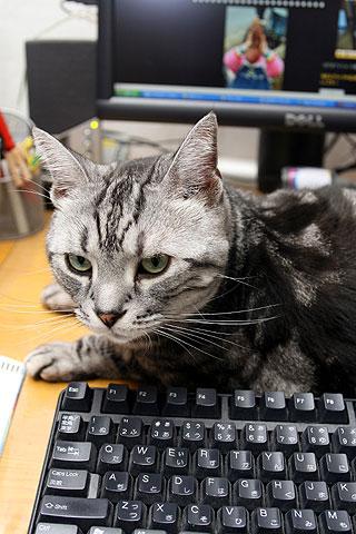 2009年11月1日 監視