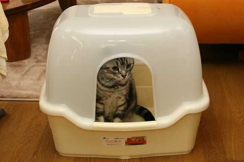 2010年11月15日 新トイレ コロル F60 フード付