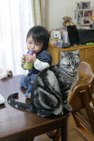 2011年11月21日 テーブルに乗る子 テーブルに乗る猫