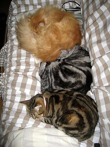 2009年11月15日 3色猫だんご