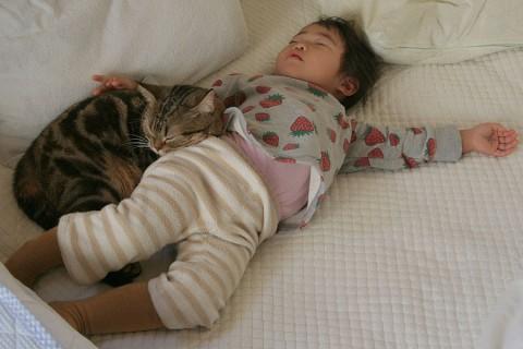 2006年12月5日 穏やかな昼寝