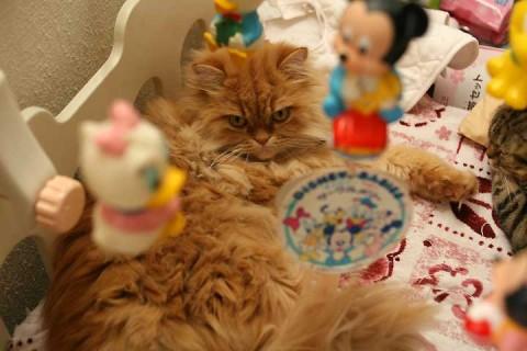 2010年12月24日 猫用ベッド