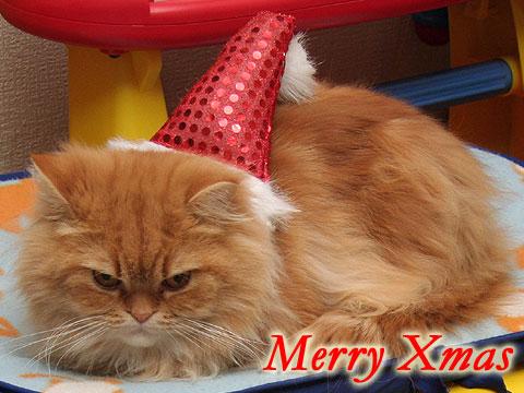 2007年12月25日 今日がクリスマスだよね?
