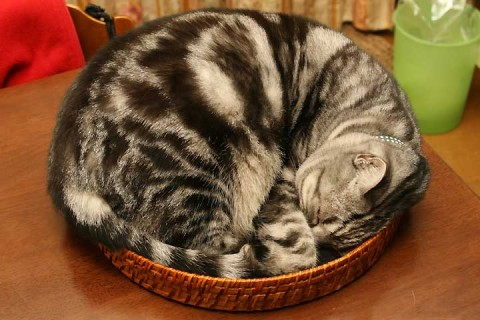 2010年12月22日 おぼん猫