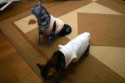 2008年1月9日 福ネコ(服ネコ)