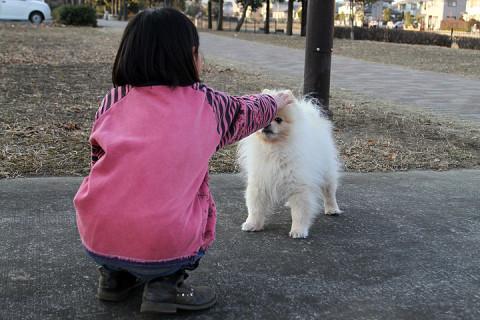 2011年12月30日 写真撮影中に通ったお散歩中のワンコ