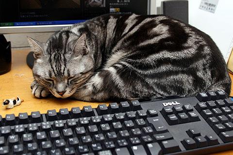 2009年1月10日 モニターとキーボードの間
