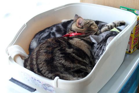 2012年1月3日 ネコトイレで昼寝中2012年1月3日 ネコトイレで昼寝中