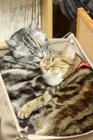 2012年1月21日 猫男爵