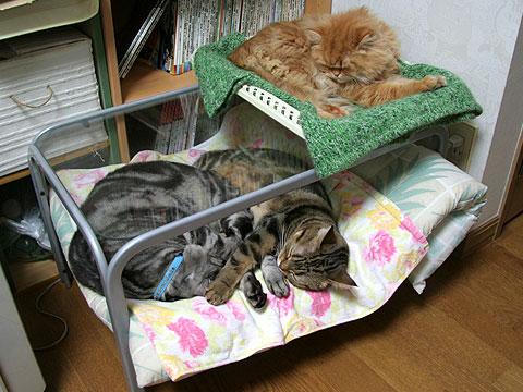 2008年1月18日 猫用特製2段ベッド