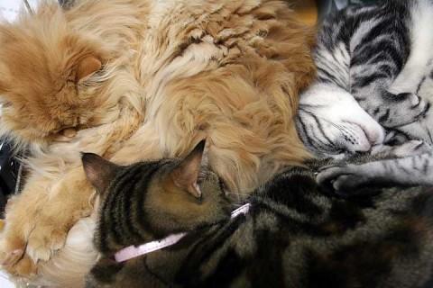 2011年1月13日 猫が詰まってます