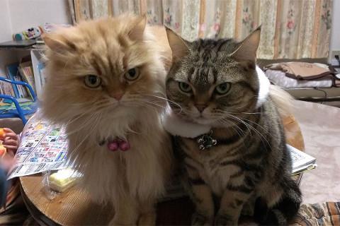 クー(右)とモグ(左)がモナカアイス待ち