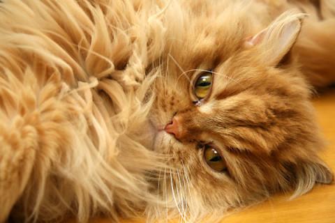 2010年2月23日 猫の日・ゾロ目の日