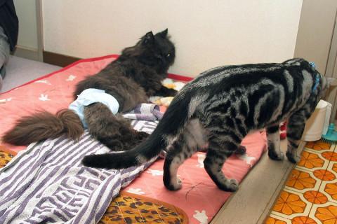 2009年2月25日 犬&猫にも進む高齢化の波