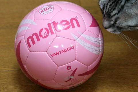2009年3月16日 女子(幼児?)サッカー