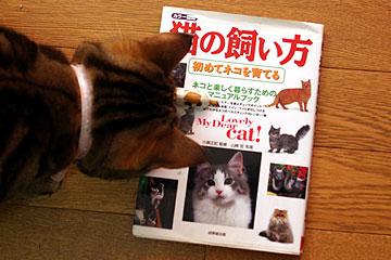 2010年2月26日 猫の飼い方