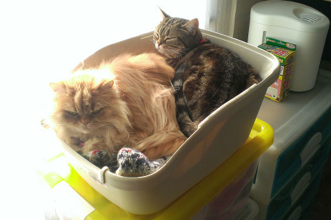 珍しくクーとモグの組み合わせでネコトイレ