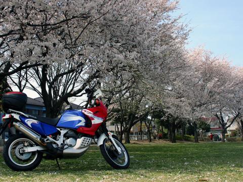 2006年4月12日 3年前の桜