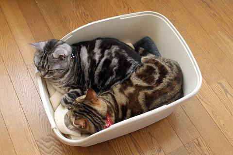 2012年4月8日 猫トイレの使い方