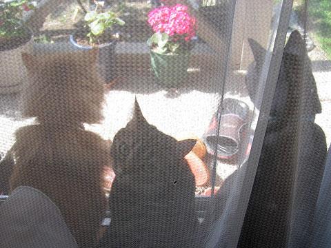 2008年4月22日 カメラ目線