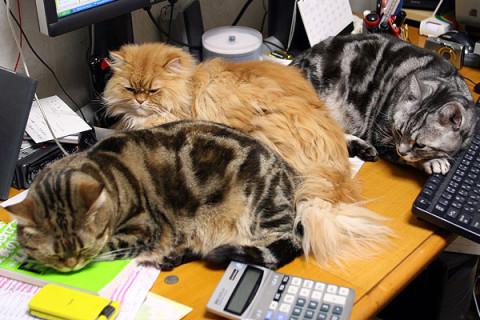 2010年4月15日 猫置き場