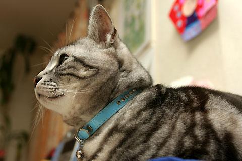 2008年4月15日 「我が家自慢のねこ大集合」用タムの写真候補 その5