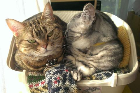 いつものとおり猫トイレで寝るタムとクー