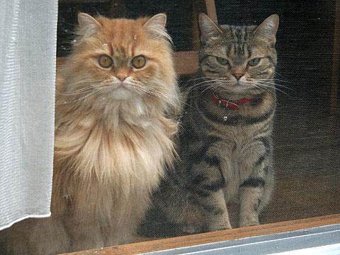 2008年5月12日 丸目と猫目