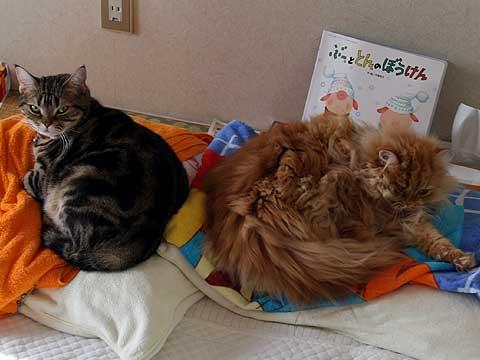 2009年1月21日 1匹1枕
